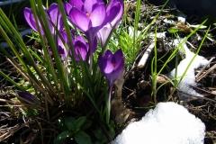 Frühling am Balkon (1024x768)