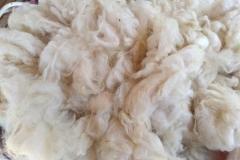 Wolle-waschen37
